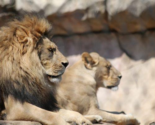 Visite réserve africaine de sigean